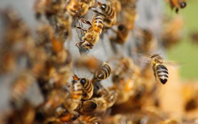 Carbon Offest Initiative – Beekeeping