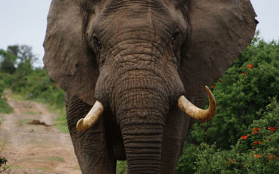 ELEPHANT CONSERVATION AND HUMAN ELEPHANT CONFLICT MITIGATION PROGRAM