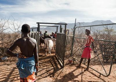 NRTT Livestock Market (Credit Duncan NdotonoNRT)