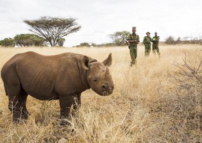 Photo by Mariella Furrer NRT_Loijipu rescued rhino back in Sera beginning wild life_3352.jpg