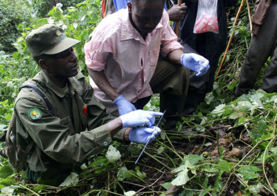 Rangers collecting fecal samples