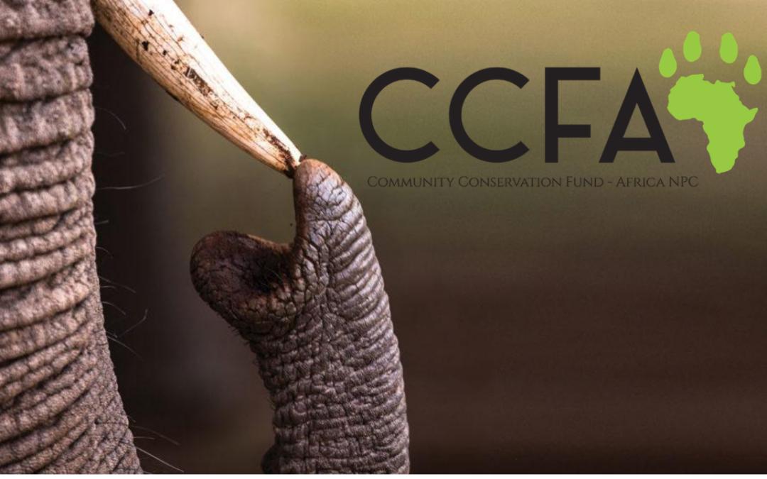 CCFA Fact Sheet