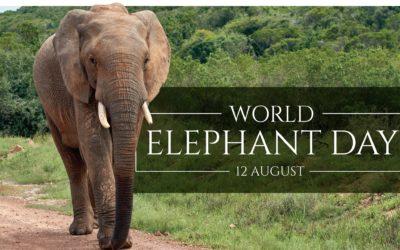 World Elephant Day 2020 – Championing the survival and sustainability of elephant populations